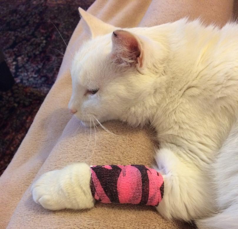 Bandaged Muci