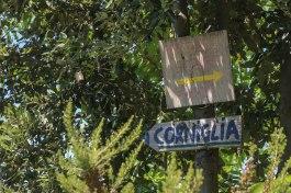 Corniglia sign